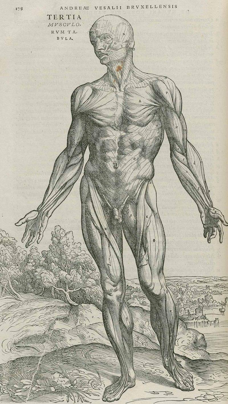 Medical Humanities Blog Imaging The Medical Humanities Vesalius